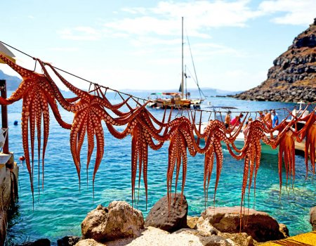 F.N. Sharp Guide to Greek Seafood