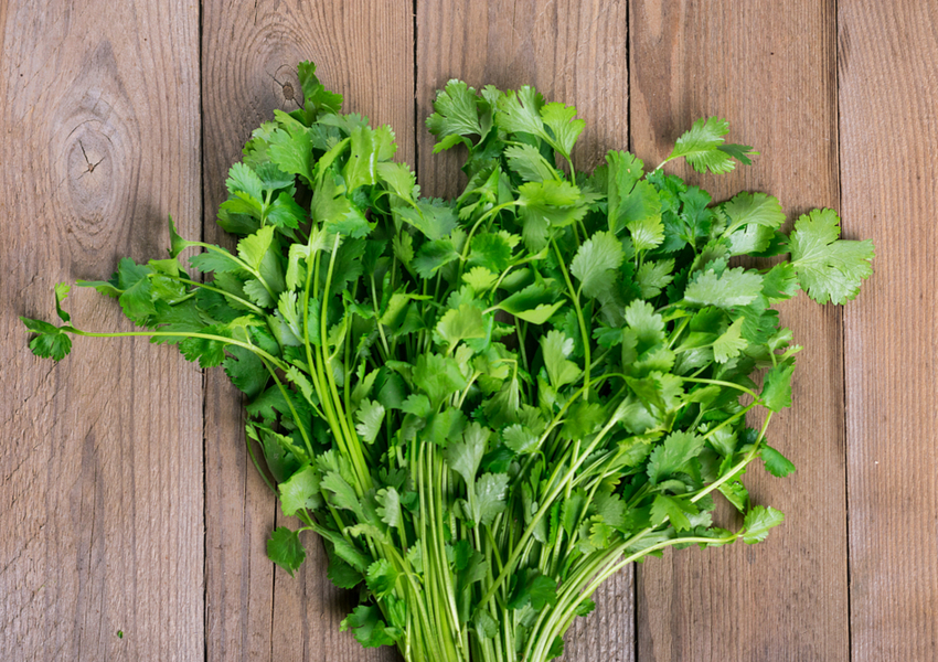 Cooking With Herbs and Spices: Cilantro