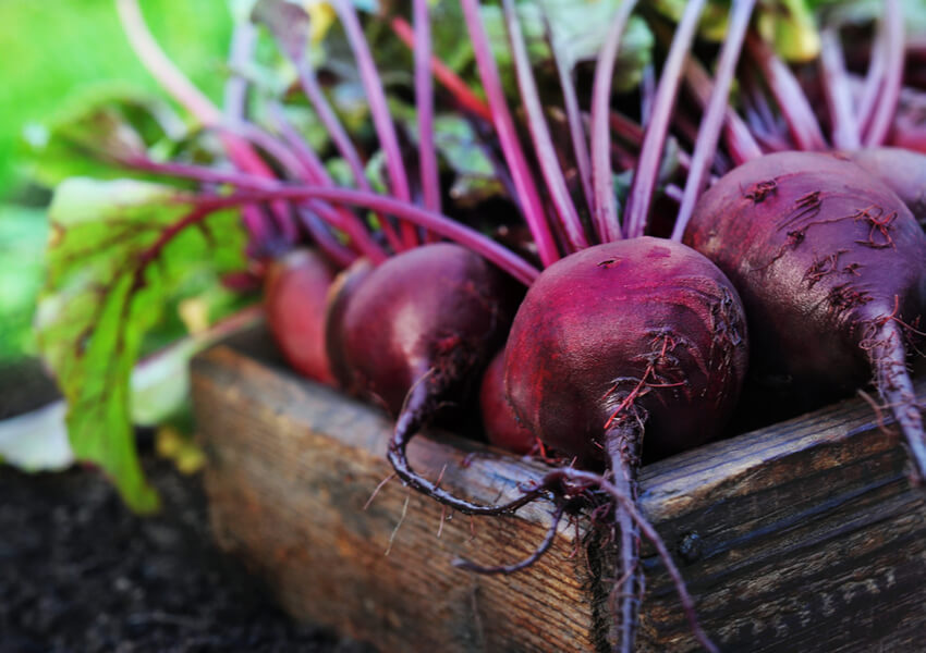 Fall Vegetables: Beets