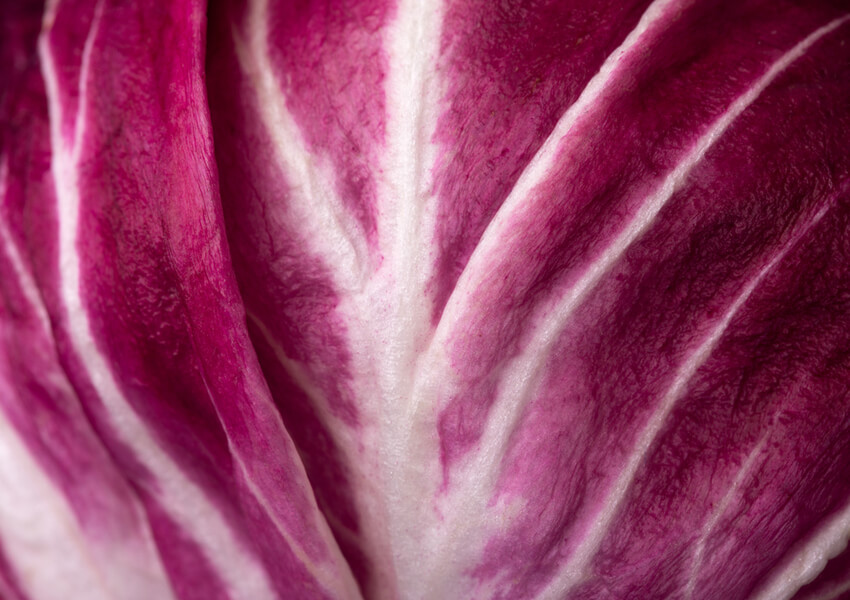 Fall Vegetables: Radicchio