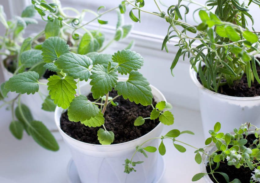 Gifts for Foodies & Entertainers: Herb Garden